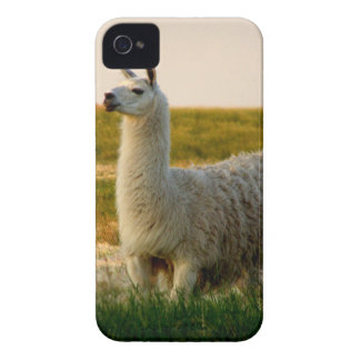 Coque Case-Mate iPhone 4 Maman de lama de prairie