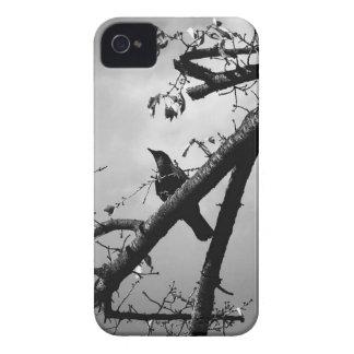 Coque Case-Mate iPhone 4 Oiseau se reposant de branche animale de faune