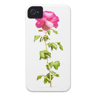 Coque Case-Mate iPhone 4 Photo de rose de rose