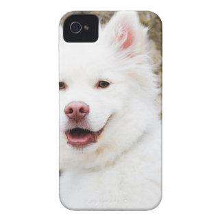 Coque Case-Mate iPhone 4 poursuivez beau heureux de bébé de joie animale