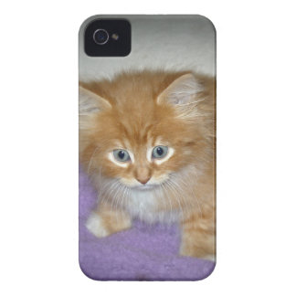 Coque Case-Mate iPhone 4 Tache sur ce chaton