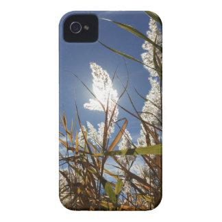 Coque Case-Mate iPhone 4 Thème de lumière du soleil d'éblouissement