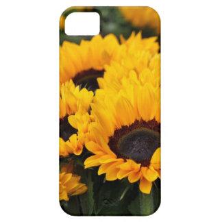 Coque Case-Mate iPhone 5 Cas de téléphone de tournesol