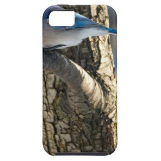 Coque Case-Mate iPhone 5 Geai bleu