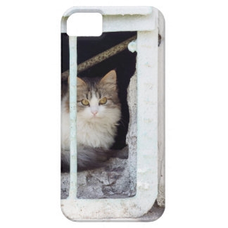 Coque Case-Mate iPhone 5 Le chat sans abri observe la rue