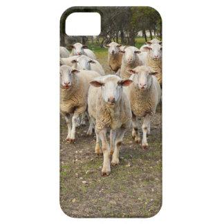 Coque Case-Mate iPhone 5 Les moutons viennent marchant dans les hourras,