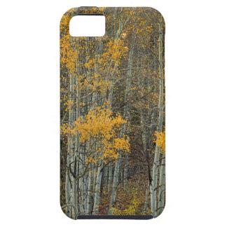 Coque Case-Mate iPhone 5 Région sauvage de forêt d'Aspen