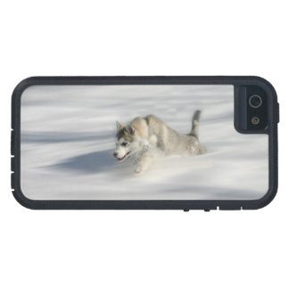 Coque Case-Mate iPhone 5 Voler dans un rêve de Huskys - cas de l'iPhone 5