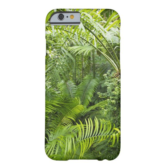 coque iphone 6 amazonie