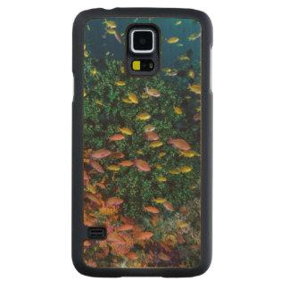 Coque En Érable Galaxy S5 Case Écoles de bain de poissons en récif