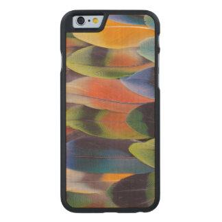 Coque En Érable iPhone 6 Case Abrégé sur plumes de queue de perruche