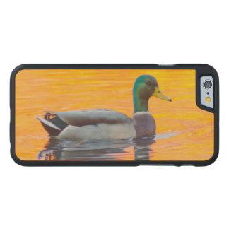 Coque En Érable iPhone 6 Case Canard de Mallard sur le lac orange, Canada