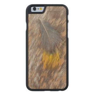 Coque En Érable iPhone 6 Case De plume toujours la vie grise