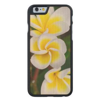 Coque En Érable iPhone 6 Case Le Plumeria fleurit le plan rapproché, Hawaï