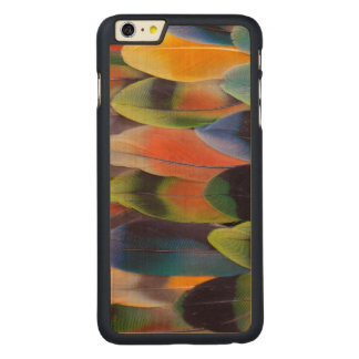 Coque En Érable iPhone 6 Plus Abrégé sur plumes de queue de perruche
