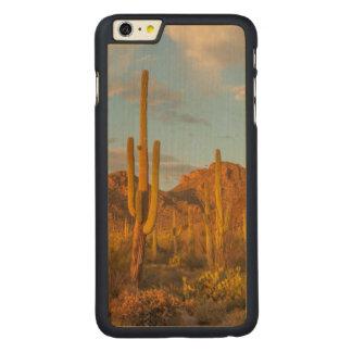 Coque En Érable iPhone 6 Plus Cactus de Saguaro au coucher du soleil, Arizona