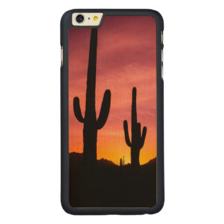 Coque En Érable iPhone 6 Plus Cactus de Saguaro au lever de soleil, Arizona