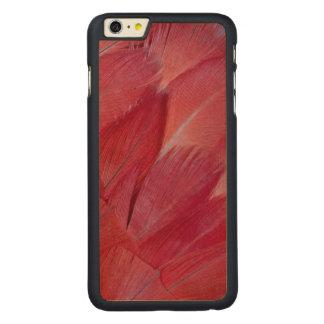 Coque En Érable iPhone 6 Plus Conception de plume de perroquet de gris africain