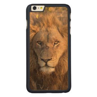 Coque En Érable iPhone 6 Plus Portrait d'un lion masculin