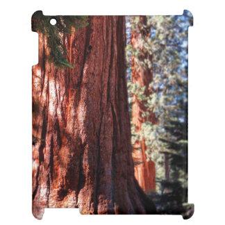 Coque ipad de séquoia géant