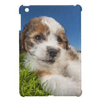 Coque iPad Mini Chiot mignon (Shitzu)