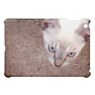 Coque ipad siamois de chaton