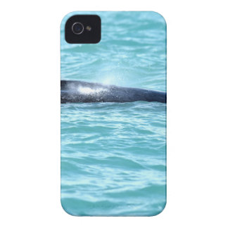 COQUE iPhone 4 BALEINE DE BOSSE QUEENSLAND AUSTRALIE