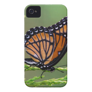 Coque iPhone 4 Beauté de papillon de monarque