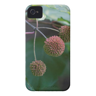 Coque iPhone 4 Bourgeons de fleur sauvage de Bush de bouton