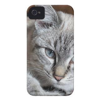 Coque iPhone 4 Case-Mate Animal familier de maquereau de Mieze de chaton de