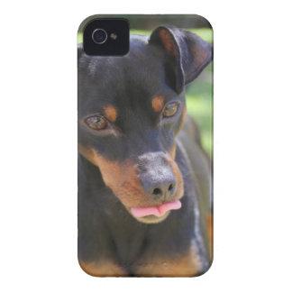 Coque iPhone 4 Case-Mate chien