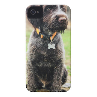 Coque iPhone 4 Case-Mate Chiot de griffon de pointage à poils durs