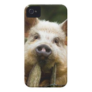 Coque iPhone 4 Case-Mate Deux porcs - ferme de porc - fermes de porc