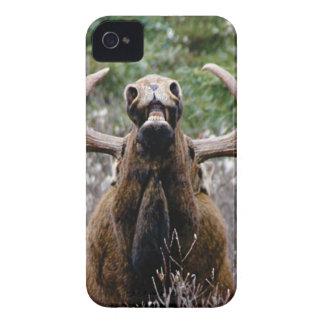 Coque iPhone 4 Case-Mate d'orignaux étranges de taureau