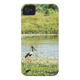 COQUE iPhone 4 Case-Mate JABIRU QUEENSLAND RURAL AUSTRALIE