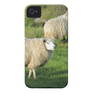 Coque iPhone 4 Case-Mate Moutons irlandais