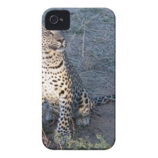 Coque iPhone 4 Case-Mate Observation de petit animal de léopard