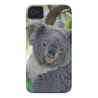 Coque iPhone 4 Case-Mate Ours de koala dans un arbre