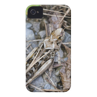 Coque iPhone 4 Case-Mate Sauterelle camouflée