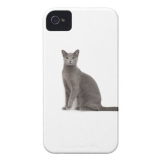 Coque iPhone 4 Chat russe bleu