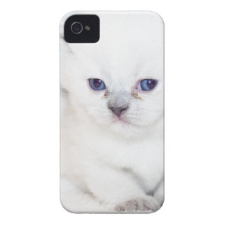 Coque iPhone 4 Chaton blanc doux