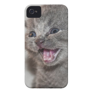 Coque iPhone 4 Chaton de gris de Miaowing