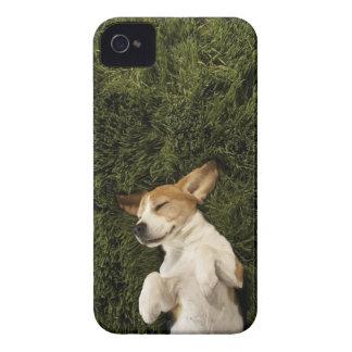 Coque iPhone 4 Chien se situant dans le sommeil d'herbe