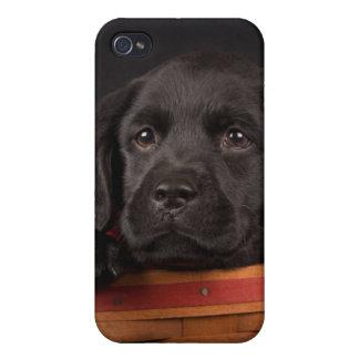 Coque iPhone 4 Chiot noir de labrador retriever dans un panier