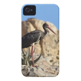 Coque iPhone 4 Cigogne noire (nigra de Ciconia) sur une roche