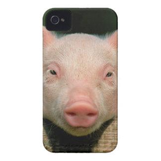 Coque iPhone 4 Ferme de porc - visage de porc