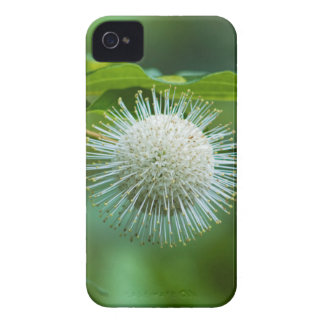 Coque iPhone 4 Fleur sauvage de Bush de bouton de l'Alabama
