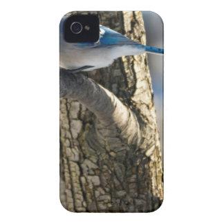Coque iPhone 4 Geai bleu