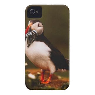 Coque iPhone 4 Île animale d'Océan atlantique de faune d'oiseau