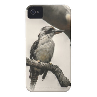 COQUE iPhone 4 KOOKABURRA QUEENSLAND AUSTRALIE